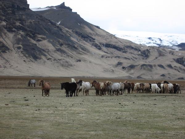 Blog - Horses Iceland