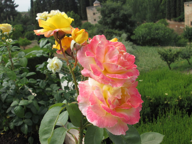 Alhambra Gardens Granada Spain