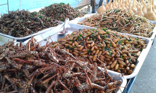 A cart full of fried insects...how could we resist?